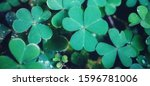 Small photo of Clover leas for Green background with shamrock onhand, Green background with hand holding three-leaved shamrocks. St. Patrick's day holiday symbol. vacation time