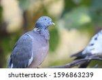 A Cute Dove Nest Closeup View