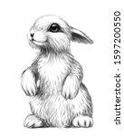 rabbit. sketch  artistic ...   Shutterstock .eps vector #1597200550
