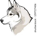 siberian husky   Shutterstock .eps vector #159727406
