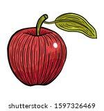 apple fruit hand drawn engraved ... | Shutterstock .eps vector #1597326469