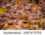 Yellow Leaves On The Floor ....