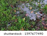 Pools Of Stagnant Water On A...