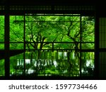 Kyoto  Japan   Fresh Green...