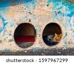 Street House For Homeless Cats...