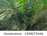 palm leaves close up on a sunny ... | Shutterstock . vector #1598075446