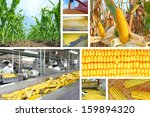 Corn production, corn on field, processing plant, collage - stock photo