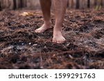 Small photo of Burning forests causes smoke. And causing damage to nature And is the cause of global warming
