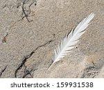 Feather On Beach