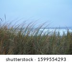 Beachgrass And The Sea  Katwij...