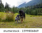 two very nice dogs of different sizes smelling each other on a meadow with the mountains of British Columbia in the background