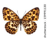 Stock photo orange butterfly with spot light black on a wing isolated on white background 159991130