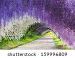 The Great Wisteria Flower Arch