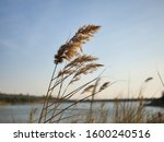 Dance With The Reeds. Lake View ...