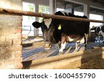 Agriculture Industry  Herd Of...