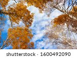 Autumn Tree Tops On Sky Clouds...