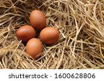 Chicken Eggs With Rice Straw In ...
