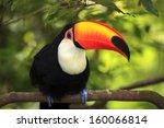 toucan  ramphastos toco  | Shutterstock . vector #160066814