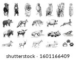 Set Of Many Animals And Foot...