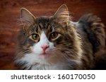 cheerful cat.  closeup | Shutterstock . vector #160170050