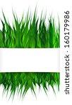 green grass on white background ... | Shutterstock .eps vector #160179986