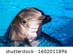 Dolphin Smiling In Water Scene...
