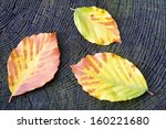 Three Autumn Beech Leaves On...