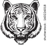 black and white vector sketch... | Shutterstock .eps vector #160226018