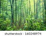 bamboo forest after rain   Shutterstock . vector #160248974