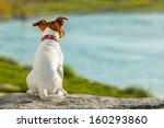 Stock photo dog thinking and watching about the future 160293860