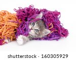 Stock photo playful kitten with colored wool on a white background 160305929