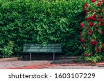 Wooden Bench With Green Plants...