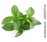 fresh mint isolated on white... | Shutterstock . vector #160325714