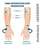 arm supination and pronation... | Shutterstock .eps vector #1603300009