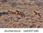 Group Of Baby Sable Antelope...