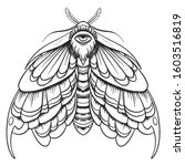 Eyed Hawk Moth Illustration ...