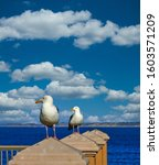 Two Gulls Keeping Watch On A...