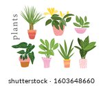 potted plants collection.... | Shutterstock .eps vector #1603648660