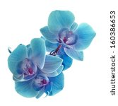 Stock photo cyan color orchid 160386653