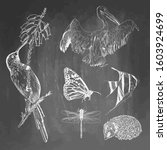 set of animals on chalkboard... | Shutterstock . vector #1603924699