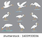 Isolated White Heron On Grey...
