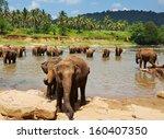elephant  on sri lanka | Shutterstock . vector #160407350