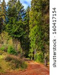autumn landscape. footpath in the coniferous forest - stock photo