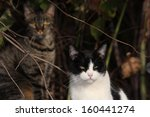 Feral Cats In The Wild Hoping...