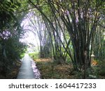 bamboo forest tree nature green ... | Shutterstock . vector #1604417233