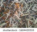 bamboo leaf brown texture... | Shutterstock . vector #1604420533