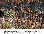Red Dot On A Tree Trunk To Mar...