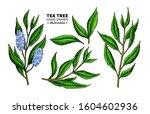tea tree vector drawing.... | Shutterstock .eps vector #1604602936