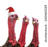 Portrait  Turkey  Isolated On ...
