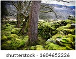 Tree And Moss Growing From...